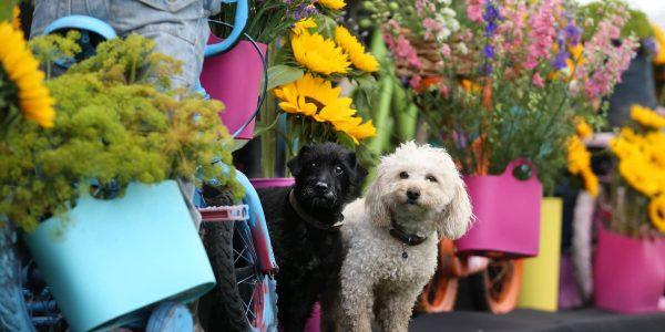 Southport Flower Show Victoria Park